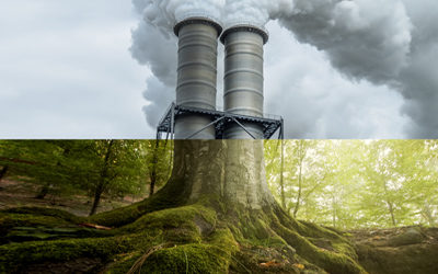 New Collaboration on Novel Approach to Carbon Capture